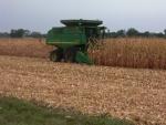 Corn September 12th