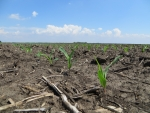 Corn May 27, Planted May 16