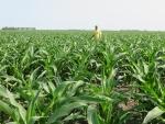Corn July 2, Planted May 1